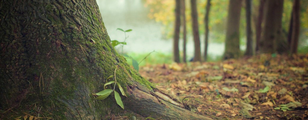 nature-forest-tree-with-moss